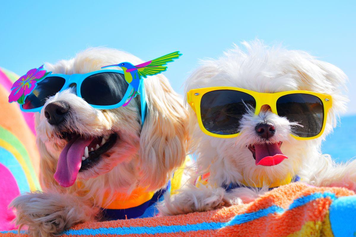 Atrakcje - plaża dla psów w Jastarni