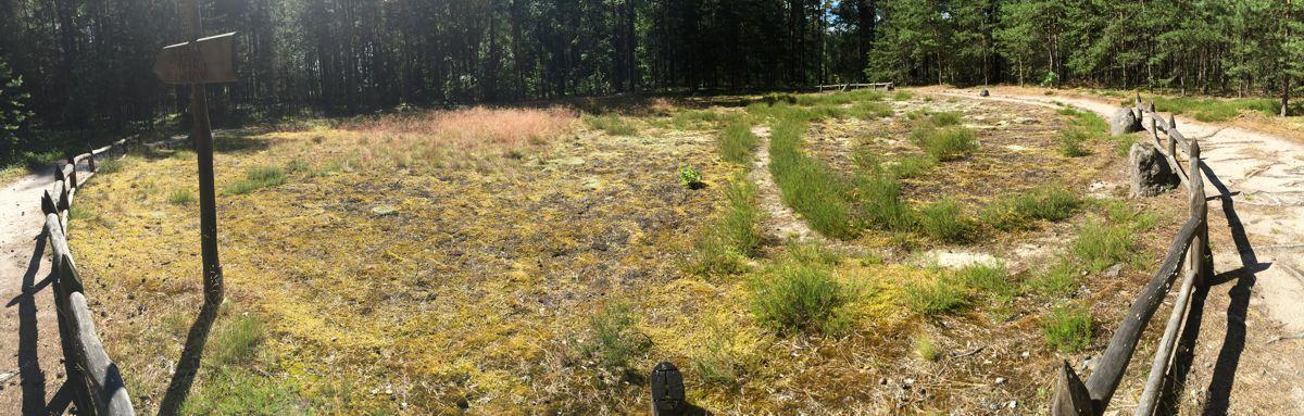 Odry kamienne kręgi w Borach Tucholskich