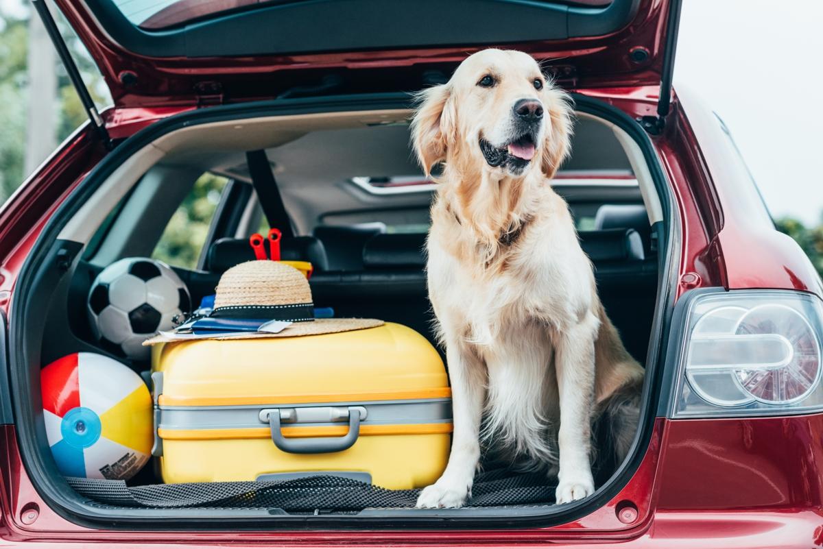 Bagażnik samochodu spakowany na wakacyjny wyjazd z psami