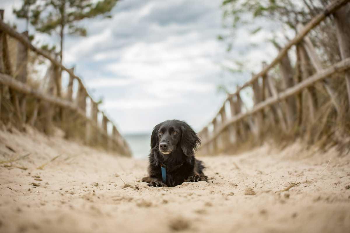 Zdjęcie czworonoga na plaży - wakacje z psem